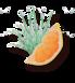 Grapefruit & Citroengras